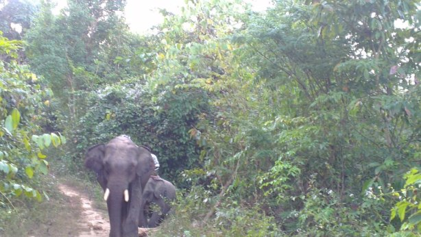 And the baby elephant followed