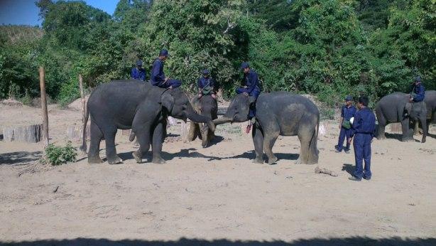 elephant hand shake