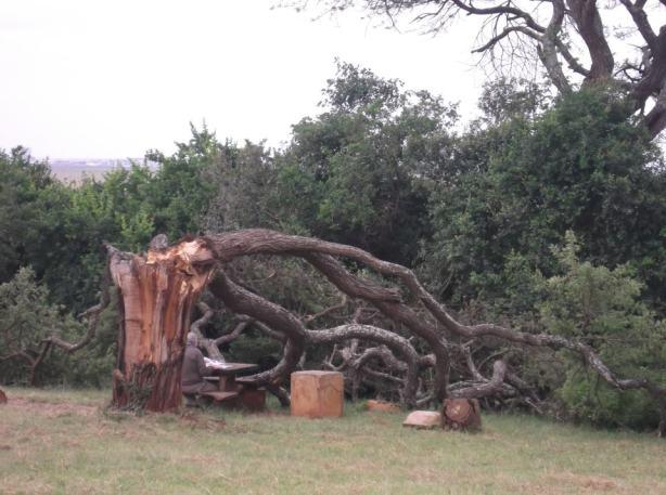 Nairobi National Park Poetic Picnic spot