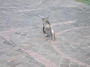Homeless Cat in Jakarta Indonesia